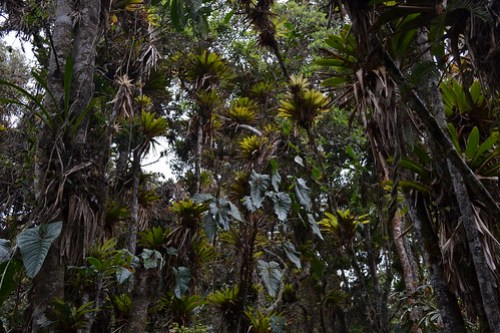 Bosque Andino Humedo