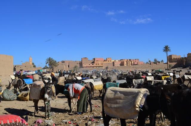 Rissani donkey market