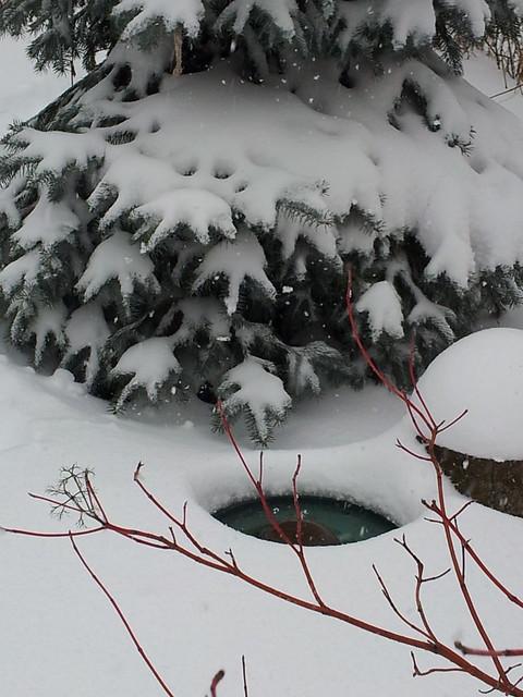 Bird Bath in Snow