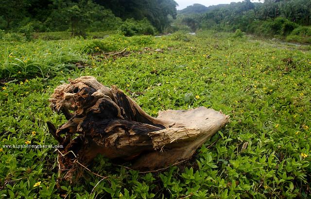 Driftwood in Pagudpud Ilocos Norte
