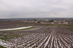 Vosne Romanee, Burgundy ,France