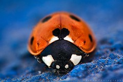 lady bug with love :)