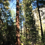 USA, PN Yosemite 10