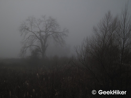 Bike_Trail_Fog_04