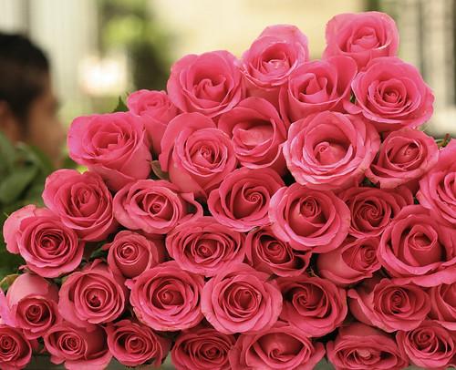 rosa flora by Elza Cohen