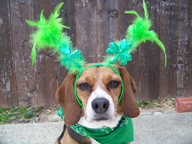Lexie dressed for St. Patrick's Day