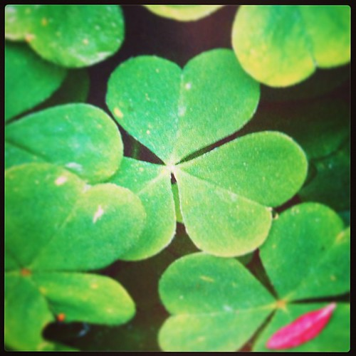 Mar 4 - lucky {haven't found a lucky 4-leaf one yet!} #fmsphotoaday