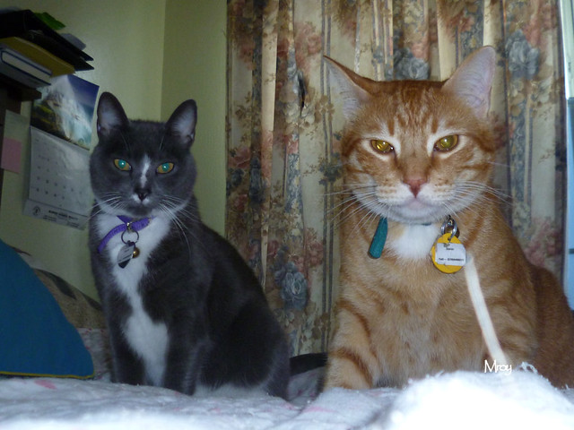 You're late.  Where's our noms?