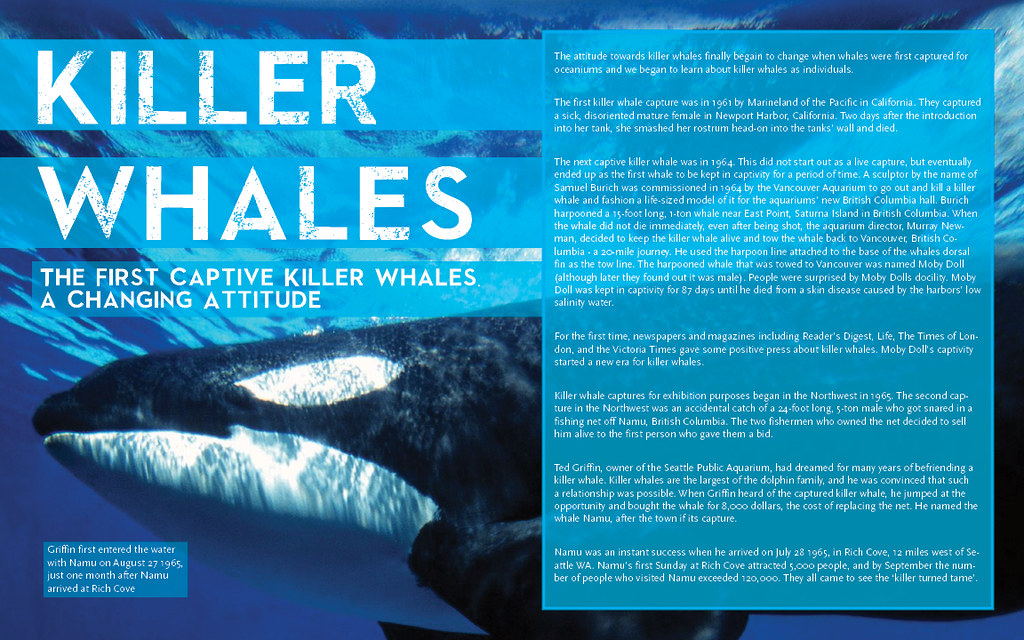 Killer Whales Article Layout