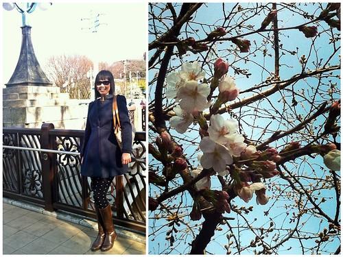 Spring is here in Tokyo~
