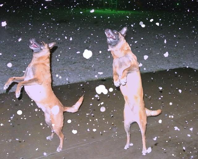 3/12/b Dazzle catching snowflakes