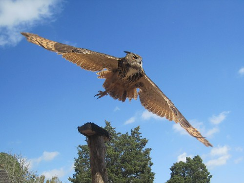 @ Sherwood Forest Faire 2013