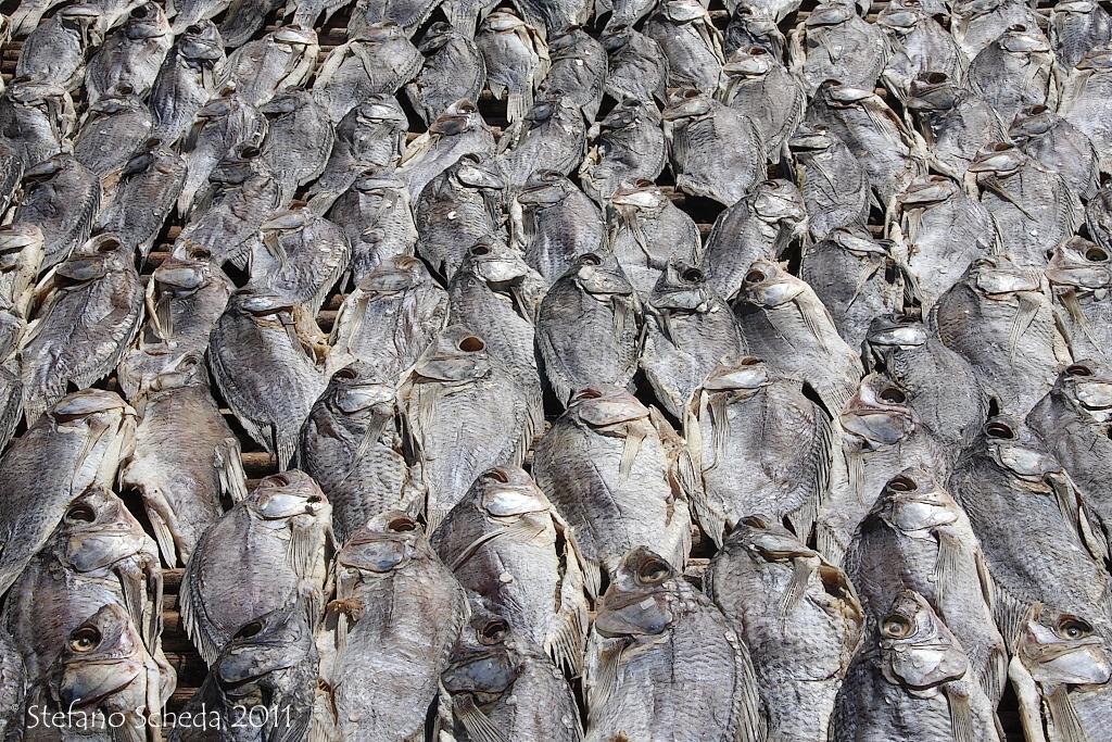 Dried fish - Uganda