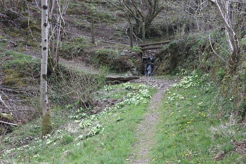 20120416_3970-woodland-walk