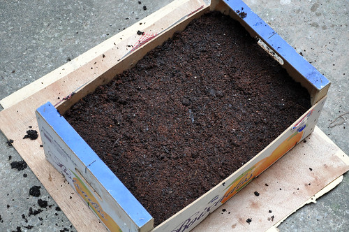 cover peas - leave an inch of space between the soil and top of crate