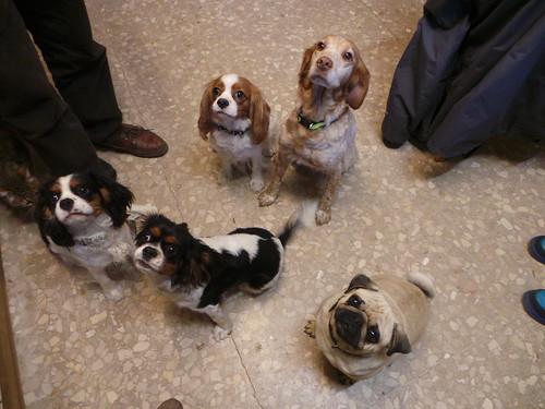Spanish vets pets