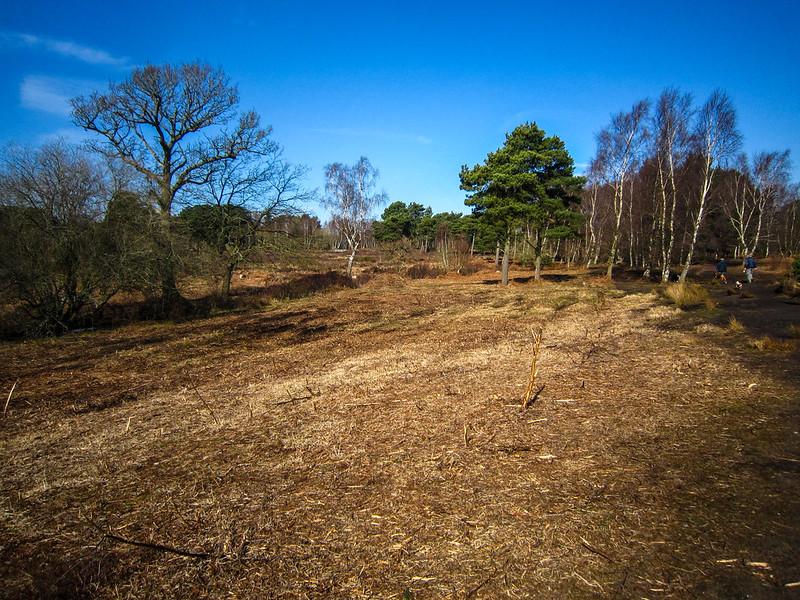 Scrub clearance on Upton Heath
