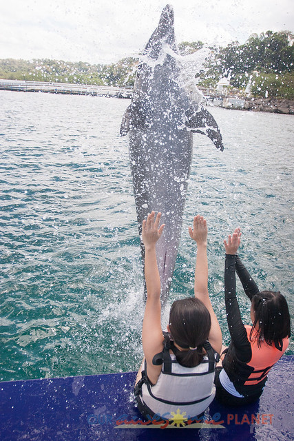 Swim Encounter with Dolphin-86.jpg