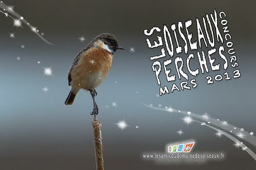 concours-mars2013