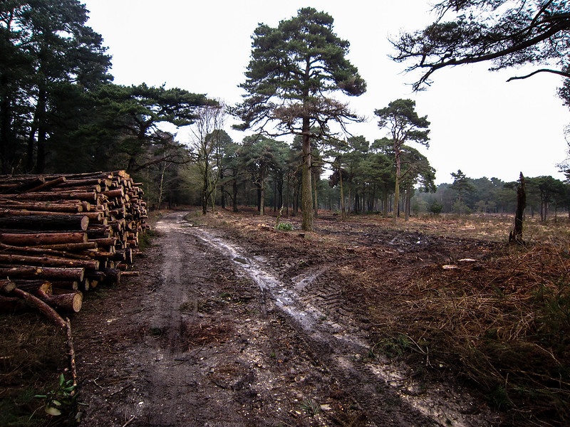 Removing the pines on Canford Heath