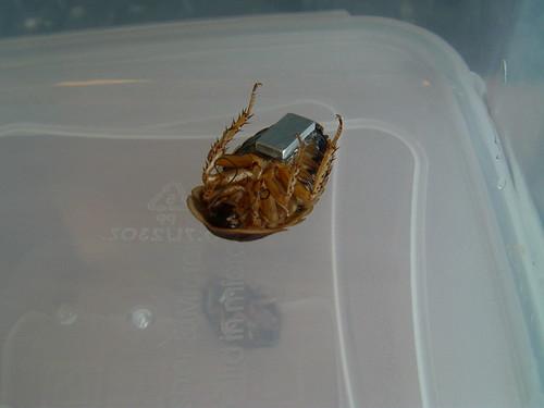 Cockroach robotics