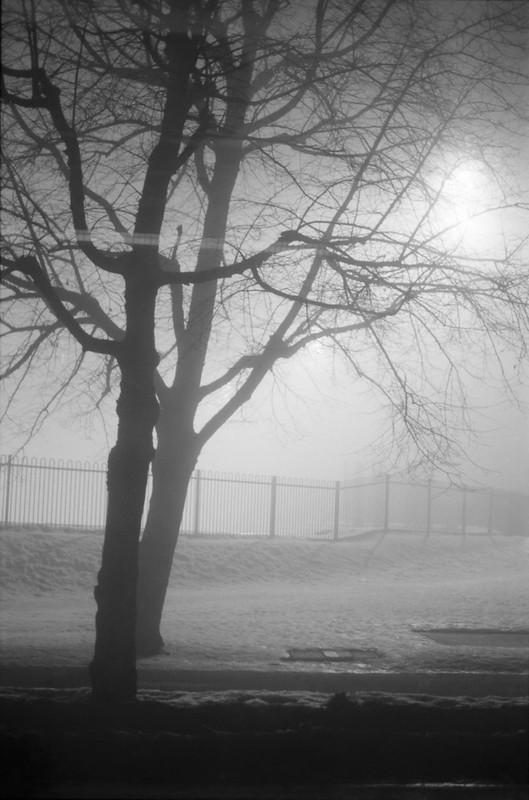 Foggy #1