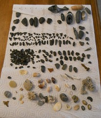 Some of my loot, all of my shark teeth