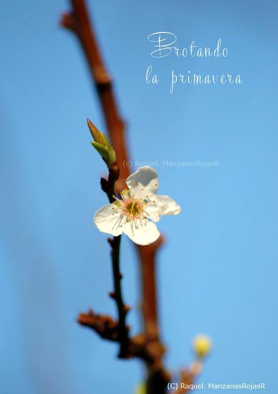 Brotando la primavera