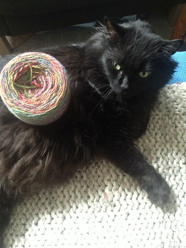 katie disapproves of my handspun