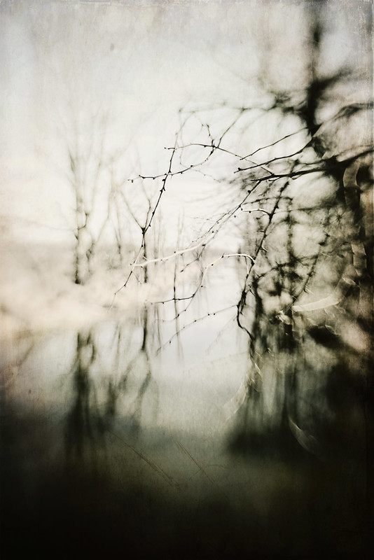 BW Trees Gallery32.net