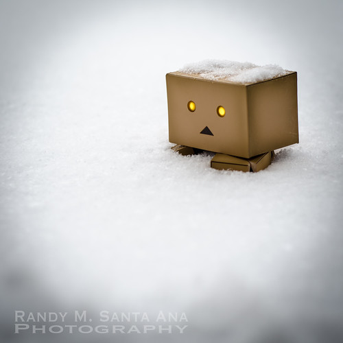 Danbo Snowed In.