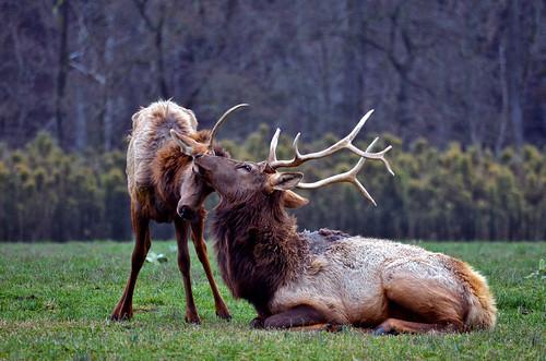 Wild Wonderment by Jeka World Photography