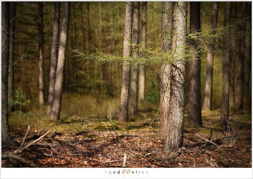 Een beetje Zonlicht in het bos