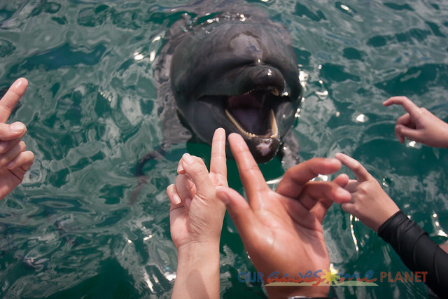 Swim Encounter with Dolphin-43.jpg