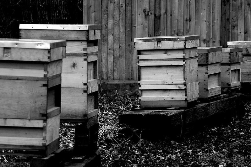 Dormant bees