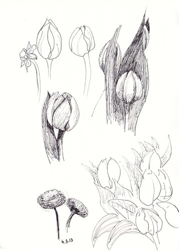 Pen sketches of flowers