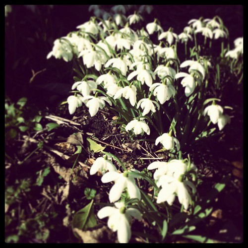 Snowdrops by Steve Worsethandetroit