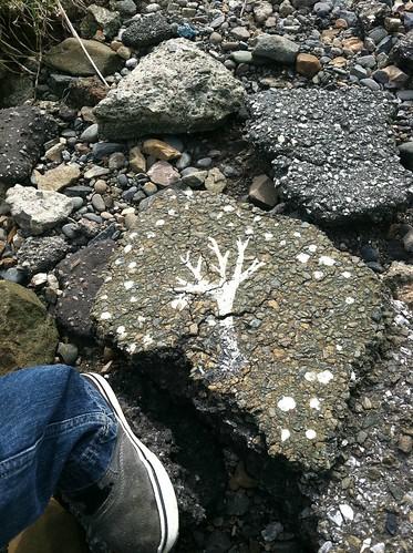 Asphalt chunk tree Albany Bulb