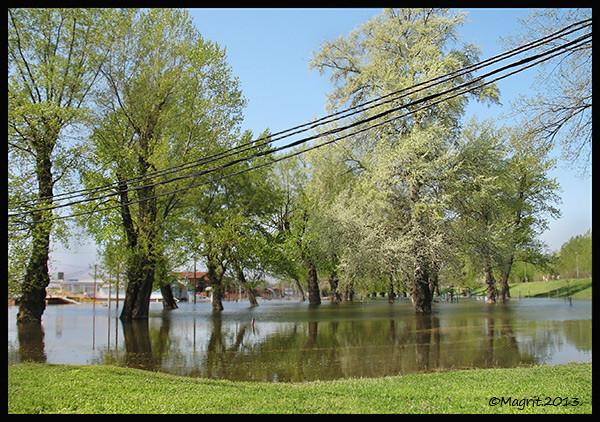 Sava flooding