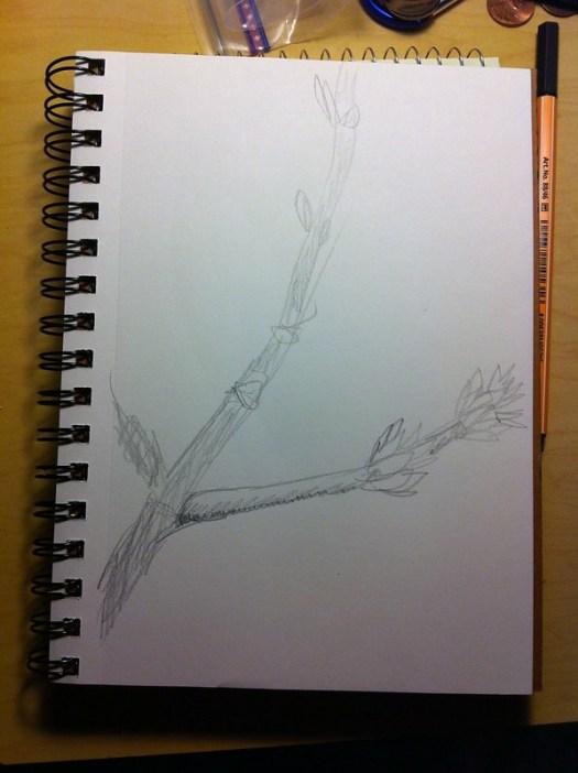 103:365 Tree in Bud
