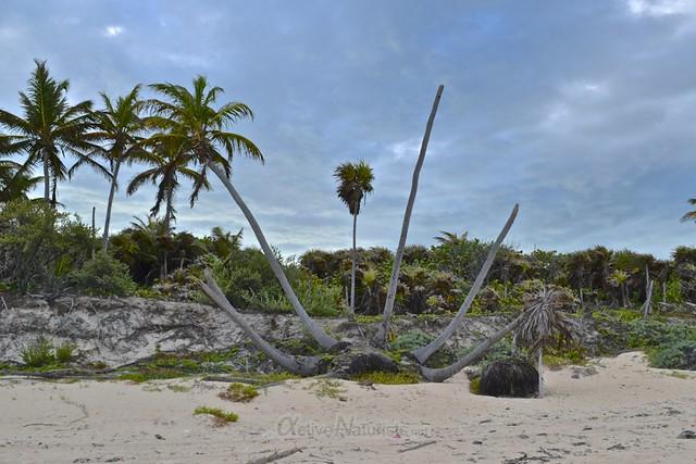 naturist  0000 Sian Kaan beach, Quintana Roo, Mexico