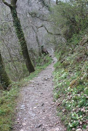 20120416_3980_Watersmeet-woodland-walk-path