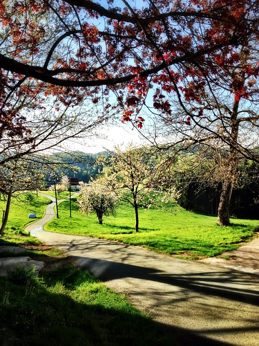 Spring morning view by SpatzMe