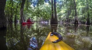 Sparkleberry Swamp (14 of 21)
