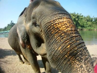 BKK Elephant Full Moon