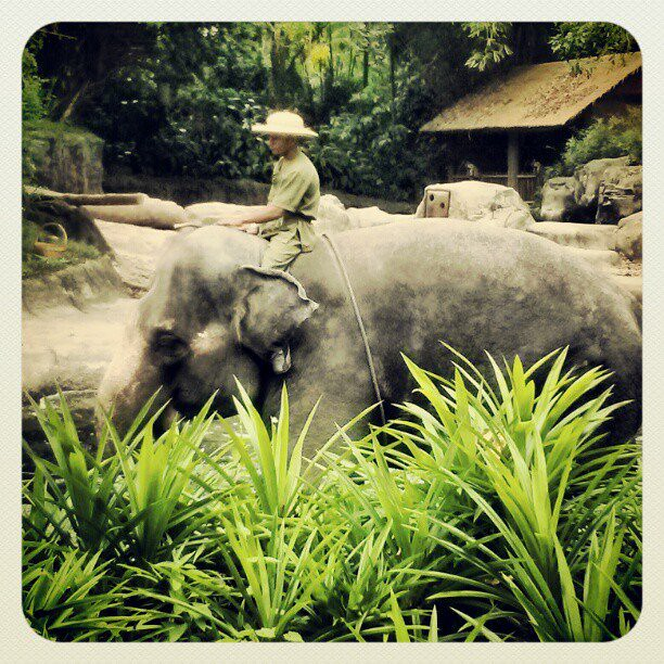 Elephant show at the Singapore Zoo