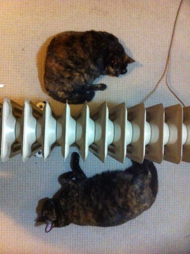 My Cats: Heater whores
