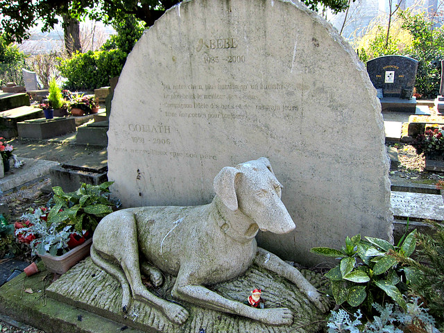 Cemetery of the dogs