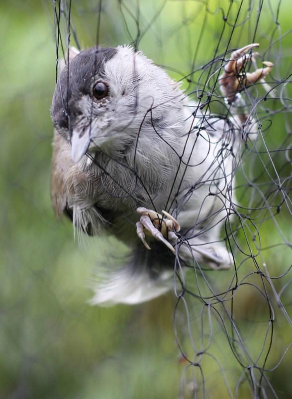 Tagging birds