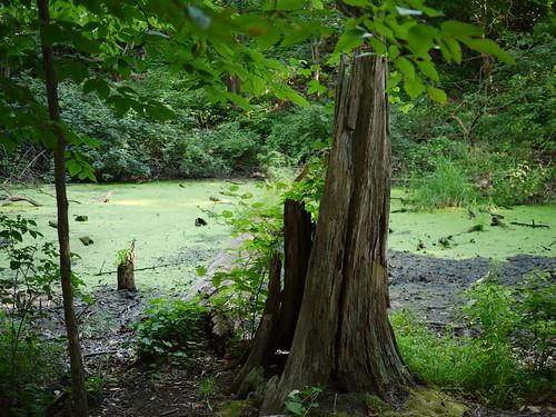 the bog of eternal stench